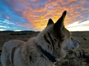 Coyote Sunset with Freckles