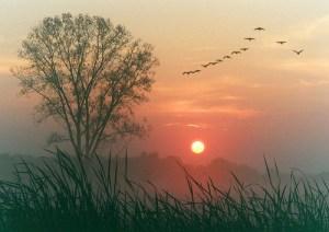 bird-birds-cloud-clouds-forest-favim-com-407069