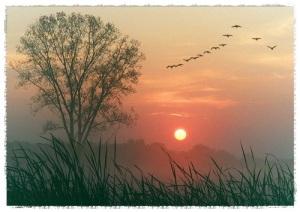 bird-birds-cloud-clouds-forest