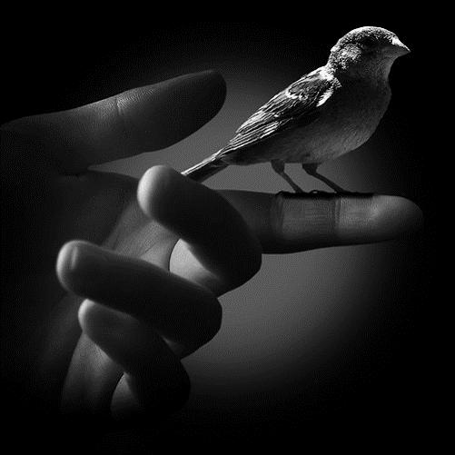 bird-in-hand-jpg